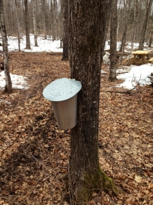 Stewart's Sugar Bush Pakenham, ON